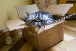 catinabox